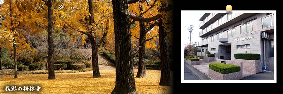 秋彩の梅林寺